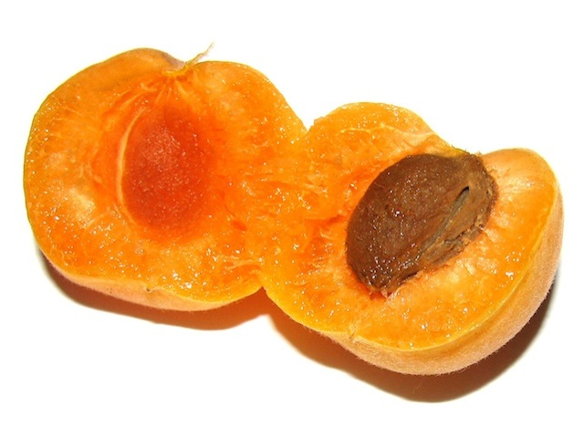 Apricot - Prunus armeniaca