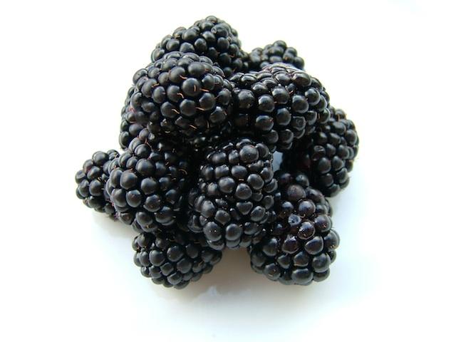 Blackberry - Rubus spp