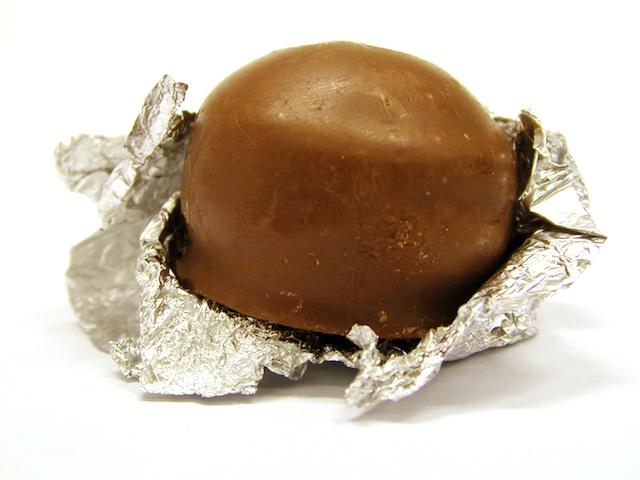 Cocoa - Theobroma cacao