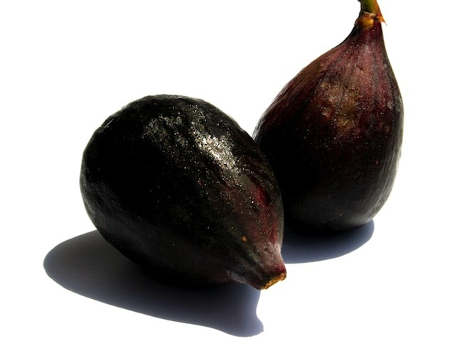 Fig - Ficus carica l.