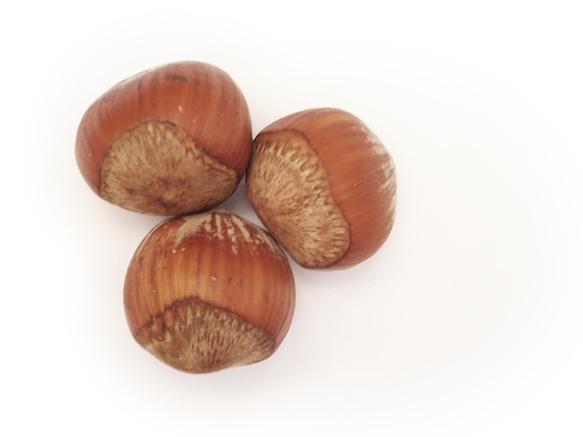 Hazelnut - Corylus avellana