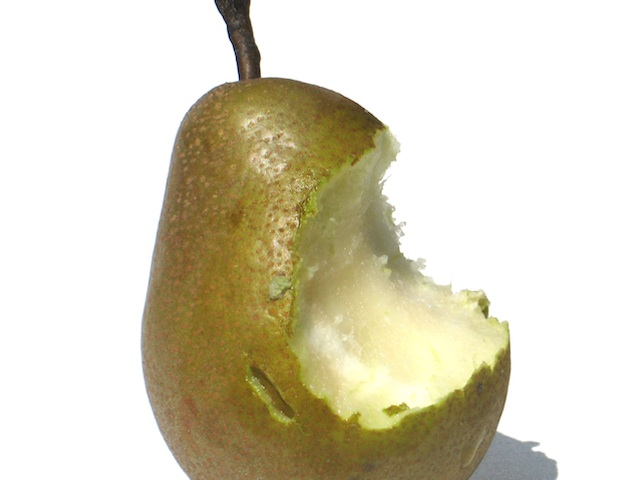 Pear  Pyrus communis, Pyrus pyfifolia