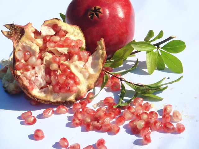 Pomegranate – Punica granatum L.