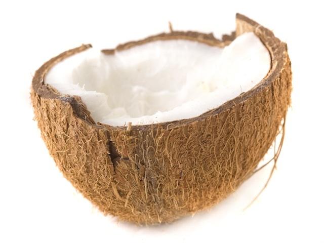 Coconut - Cocos nucifera