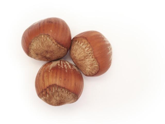 Hazelnut - Corylus avellana